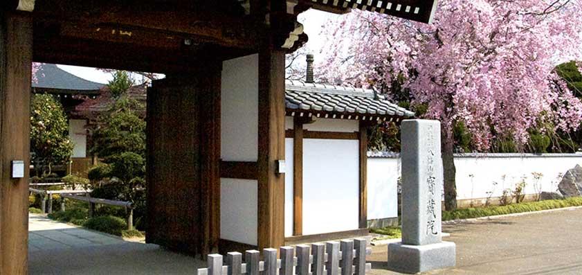 宝蔵院 山門(桜)