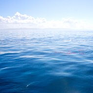 永代供養付 海洋葬