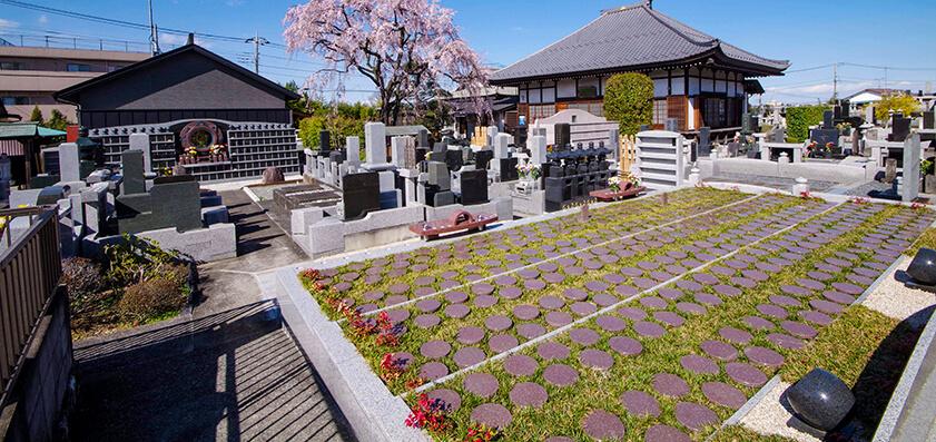 廣済寺 樹木葬からの枝垂れ桜
