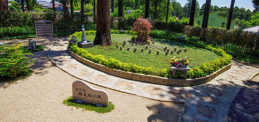 高倉観音・高蔵寺 樹木葬(自然葬)「鎌足桜の風」02