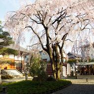 樹木葬(自然葬墓地)「桜風苑」