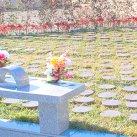 永代供養付「樹木葬(自然葬)」