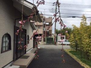 廣済寺 桜のつぼみ