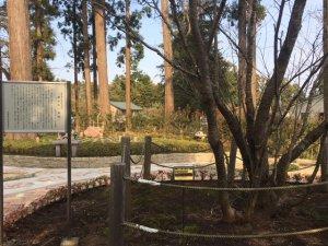 高蔵寺 鎌足桜