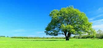 樹木葬とは?特徴や費用・メリット・デメリットを紹介します