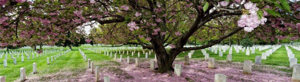 樹木葬の手続きの流れや注意点
