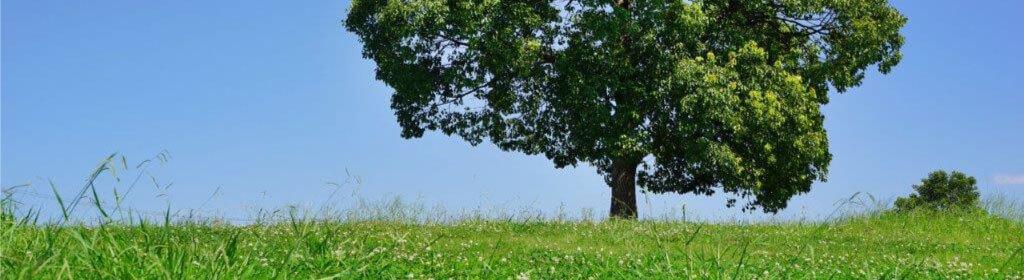 樹木葬の種類(個別型や合祀型の違い)