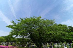 代々墓と永代供養(樹木葬)の違い