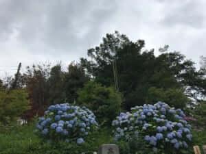 朝霞市の一乗院の境内
