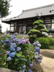 加須市の西浄寺の境内