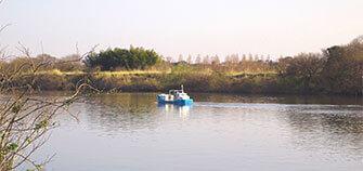 取手市で味わう風流!利根川の水面に浮かぶ渡し船