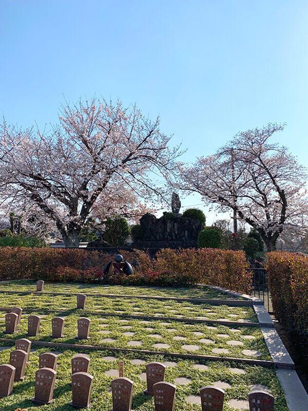桜2020 用中寺-埼玉県杉戸町