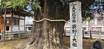 七福神から樹齢千年の御神木まで!与野のパワースポットを巡る