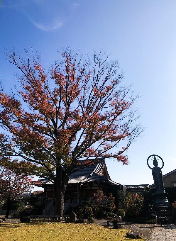 正光寺 冬の境内