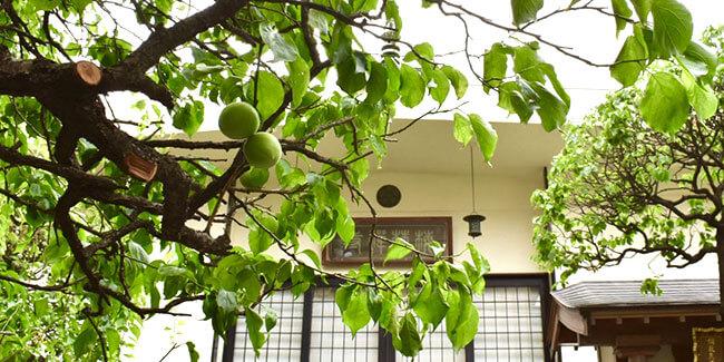 東京都台東区「梅林寺」周辺のおすすめスポット