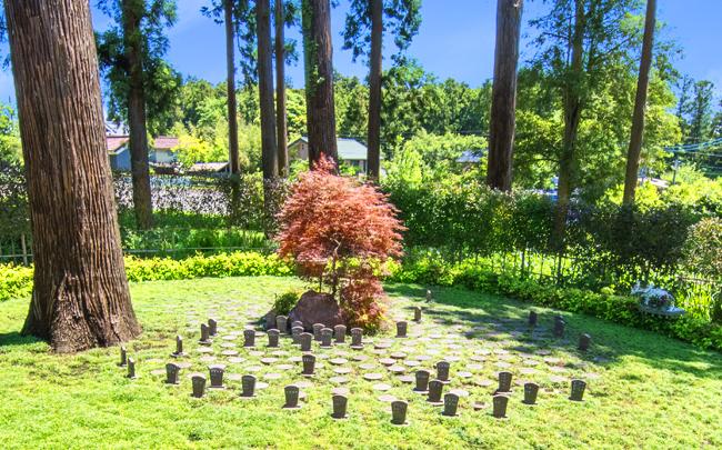 樹木葬(自然葬)